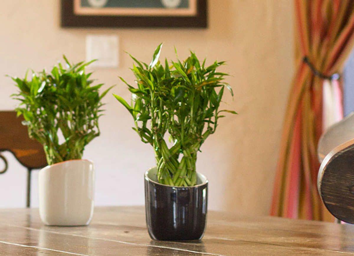 First Aids for Houseplants